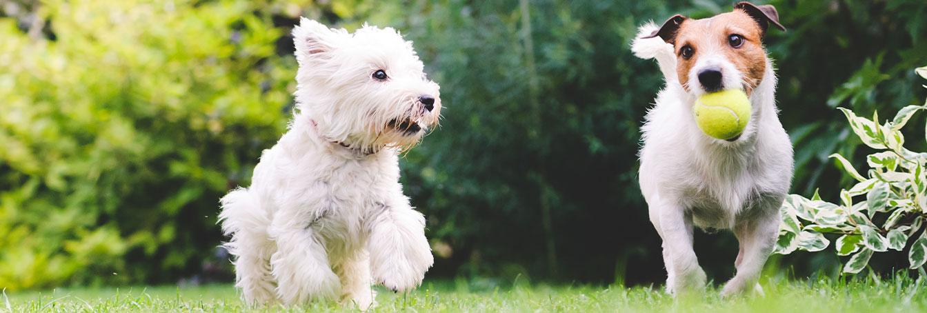 Pat The Dog | Dog Boarding