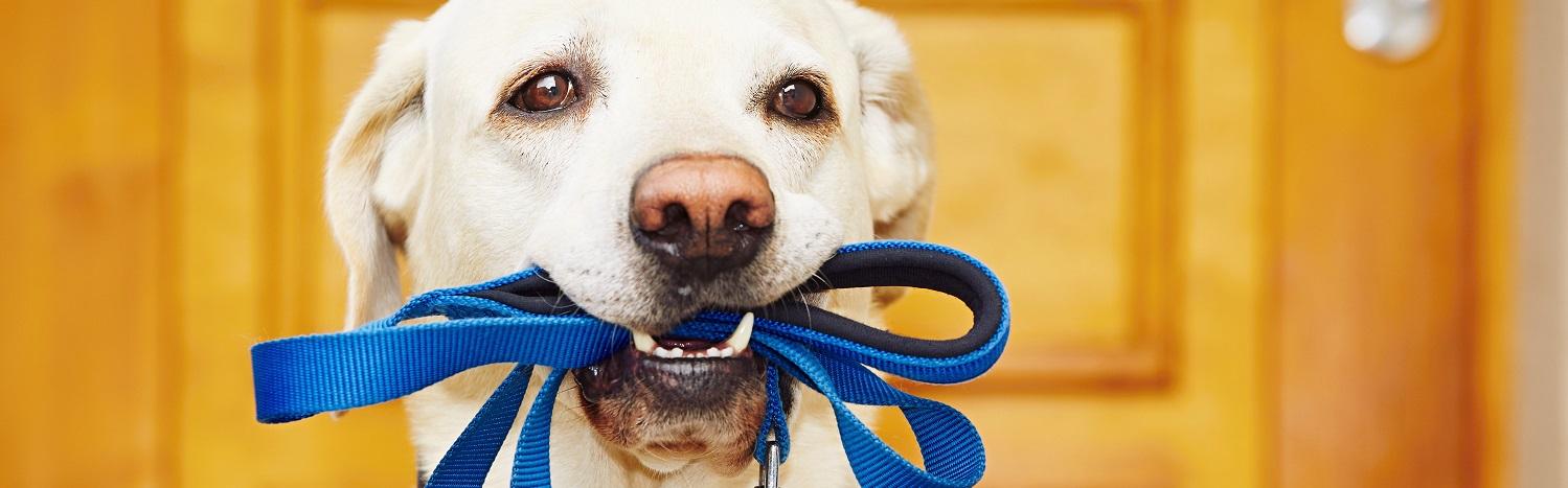 Pat The Dog | Dog Training