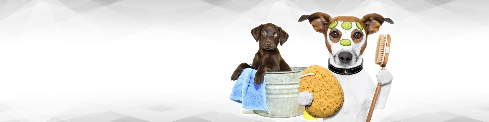 Pat The Dog | Dog Grooming