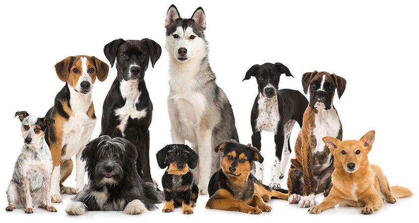 Pat The Dog | Clermont Dog Boarding, Dog Grooming, Dog Training, Dog Daycare