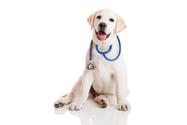 Pat The Dog | Local Vets